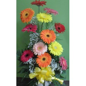 Base de 12 gerberas multicolor